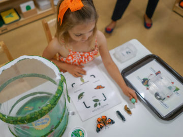 Child Understanding Insects
