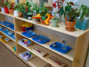 plants and plantation equipment's for kids at our cypress daycare